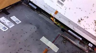 kiến chui vào laptop